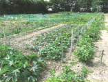 jardins-ouvriers