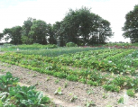 jardins-ouvriers1